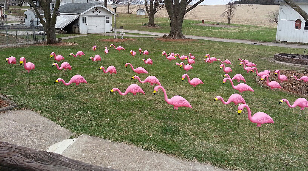 Flocked yard with pink flamingos